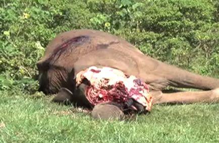 Qualvolles Sterben von Elefanten: In einem Nationalpark in Kamerun haben schwer bewaffnete Jäger über 600 Elefanten regelrecht hingerichtet: http://tiersos.de/qualvolles-sterben-von-elefanten/ #Elefant