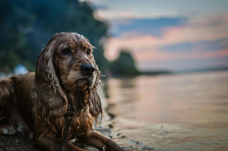 Самый лучший пёс