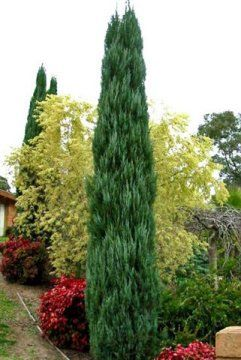 Conifer Garden Ideas dwarf conifers pinus cv acer palmatum Find This Pin And More On Conifer Garden