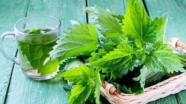Kopřiva: Plevel, který léčí. Udělejte si perventivní kúru proti senné rýmě a doplňte železo