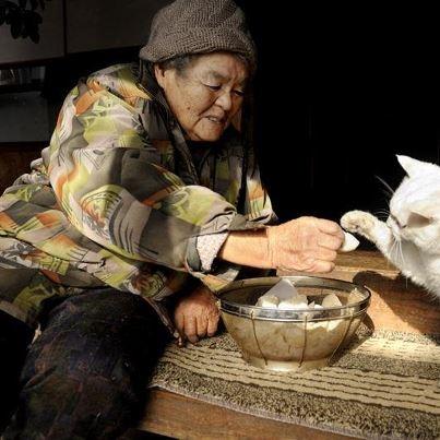Miyoko Ihara has been taking photographs of her grandmother, Misao and her beloved cat Fukumaru since their relationship began in 2003. Their closeness has been captured through a series of lovely photographs. 12-12-12 / Miyoko Ihara