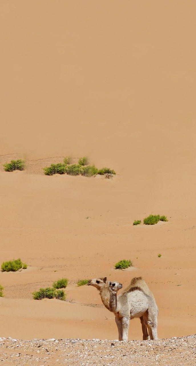 Desert of Rub Al Khali, Liwa - Oman
