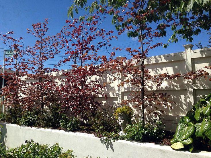 Garden Design Nursery 40 best beauchamp ~ designedhedge images on pinterest | hedges