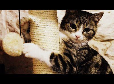 Blog de Frimousse, petit chat d'amour !