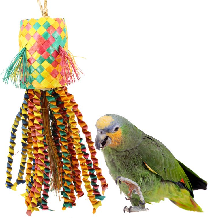 Help your pet bird stay entertained and engaged. With our safe, colorful bird toys from Bonka. Make your own toys for your parrot using our bird toy parts.