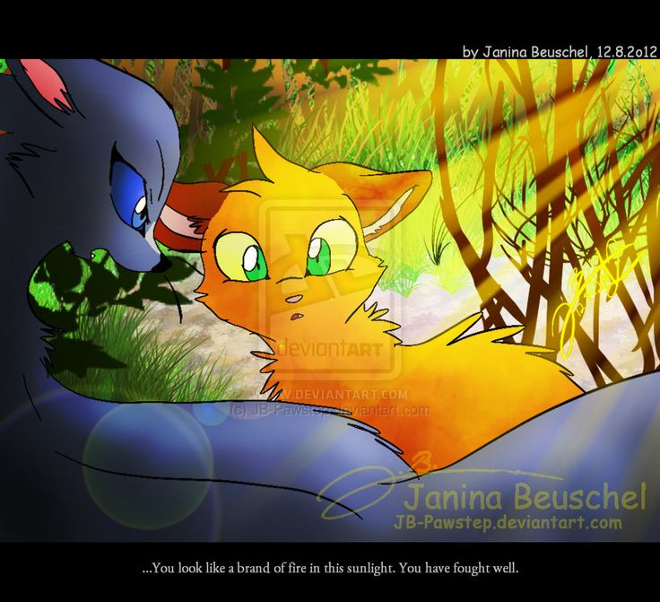 Warriors Into The Wild Manga: 40 Best Images About Warrior Cats!!!!! On Pinterest