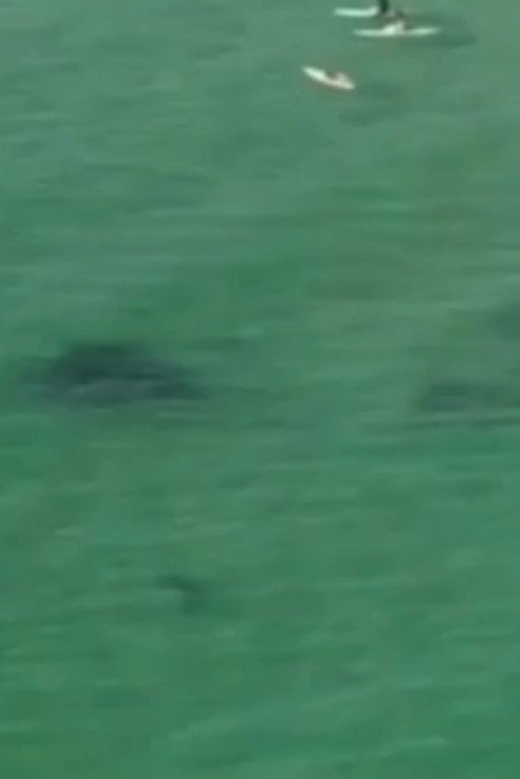 Australian News Helicopter Spots Shark Near Surfers