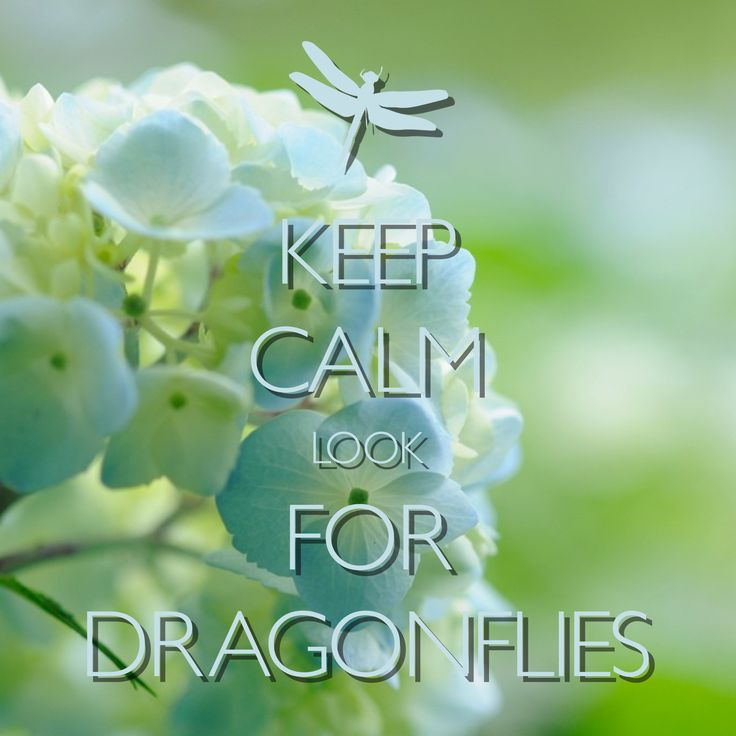 keep calm look for dragonflies / created with Keep Calm and Carry On for iOS #keepcalm #dragonfly