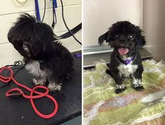 Mark Imhof Gives Old Shelter Dog Haircuts so They Find Homes, http://petsvox.com/shelter-dogs-haircuts/