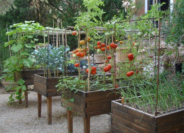love the tall raised beds... much easier as you get older