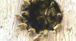 What's Happening to the the Bees?!?