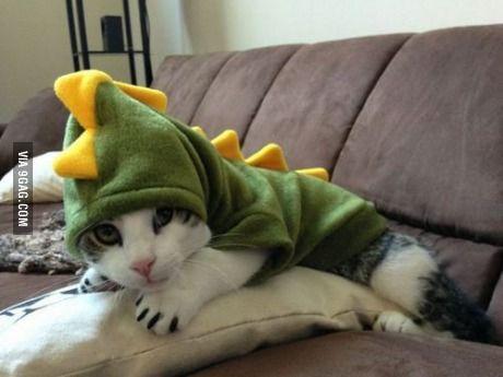 Rawr! I'm the dinosaur cat!