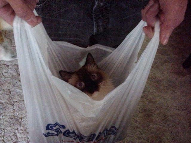 `Quien ama los gatos y si siempre ha tenido en su hogar, sabe que los gatitos siempre se esconden y juegan en el lugar menos esperado..visiten este entretenido tablero... =^.^= Cats in Bags,Boxes,  just about anything! =^.^=