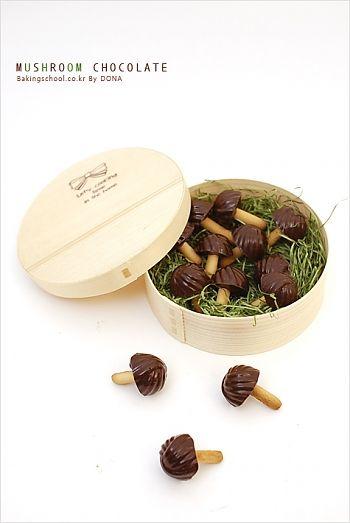 머쉬룸쵸콜릿  mushroom chocolate