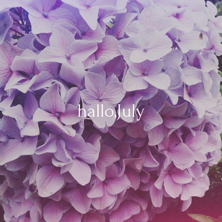 うす紫が華やかなあじさい