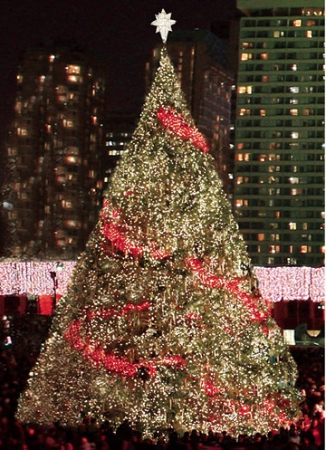 Toronto's official Christmas tree on display at Nathan Phillips Square