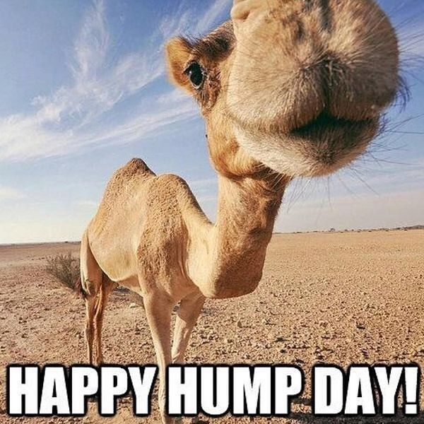 New The 10 All Time Best Home Decor In The World Www Zeemu Co Uk Happy Wednesday All It S Almost Over O Funny Hump Day Memes Hump Day Quotes Hump Day