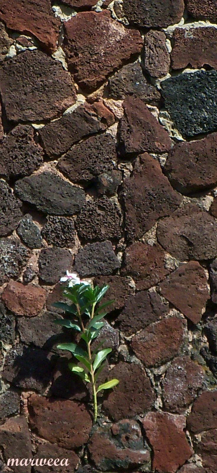 Nature always finds its way @ Guadalajara [101115]