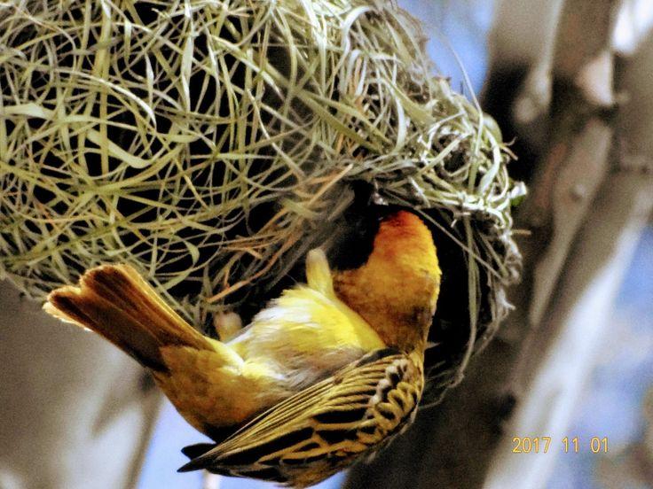 Busy bird...