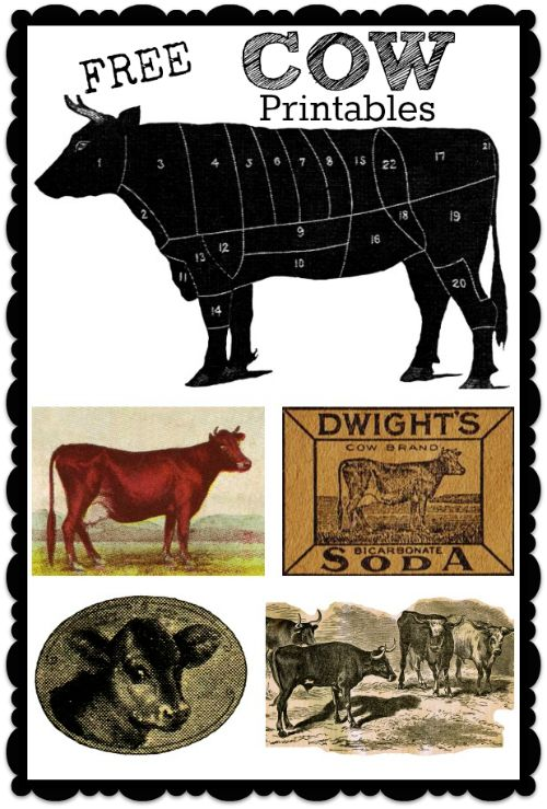 Free Printables - 5 Antique Cow Images for Signs, Transfer Projects and Printing via KnickofTime.net