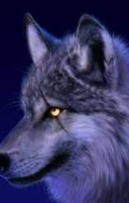 """Read """"the every day wolf - disitions"""" #wattpad #werewolf its amazing i wrout it my self"""