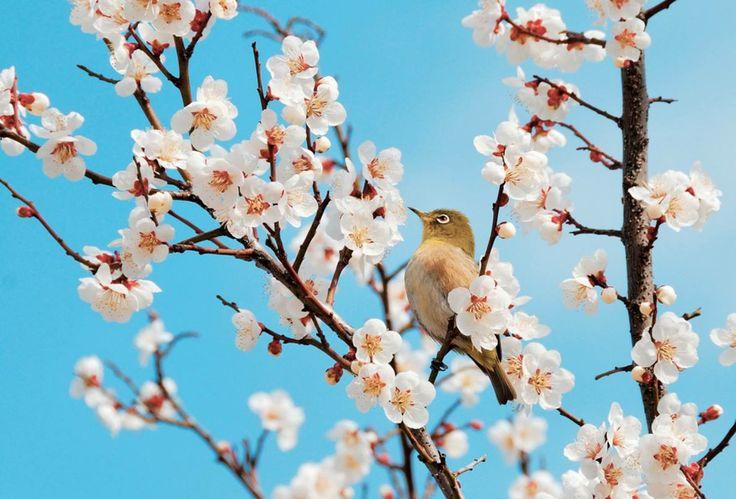 spring (1188×806)