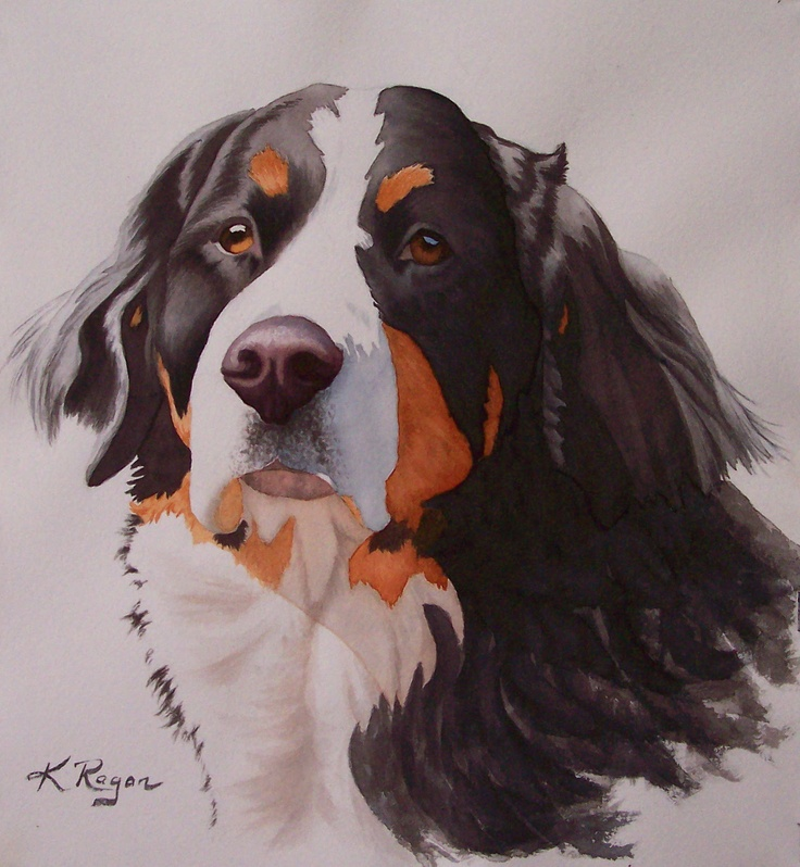 """Grace, a beautiful Bernese Mountain dog, who """"works"""" at a local tack and feed store."""