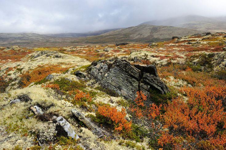 Tundra habitat Arctic tundra, Biomes, Arctic tundra animals
