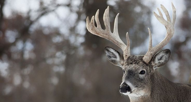 Ohio Deer Hunting Threatened by Chronic Wasting Disease [VIDEO]-Ohio's deer population and economy are struggling against Chronic Wasting Disease from Pennsylvania. See the effects from this report.