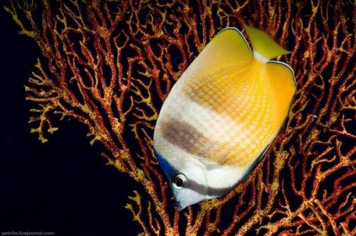 Шикарные фото океана