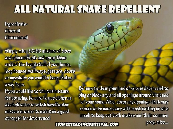 How to make your own all natural snake repellent!  More info here: http://homesteadingsurvival.com/all-natural-snake-repellent/