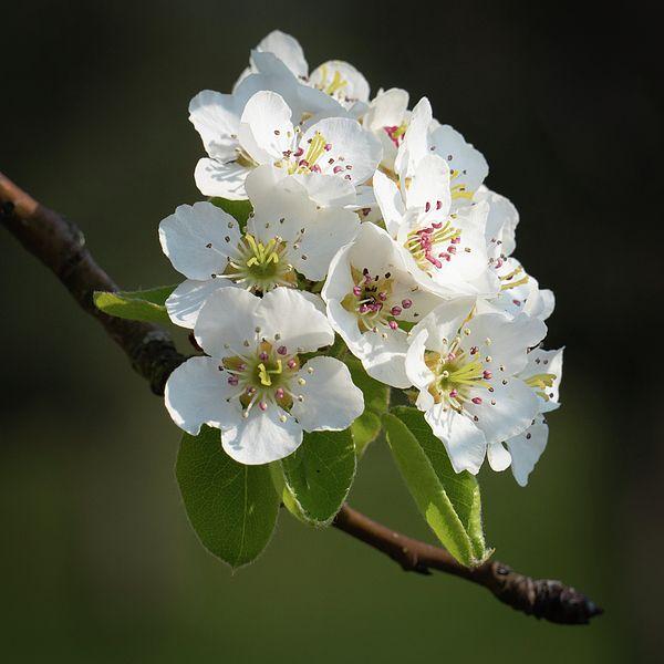 White Blossom In Spring Art Print Spring Art Fine Art America Pictures Spring Images