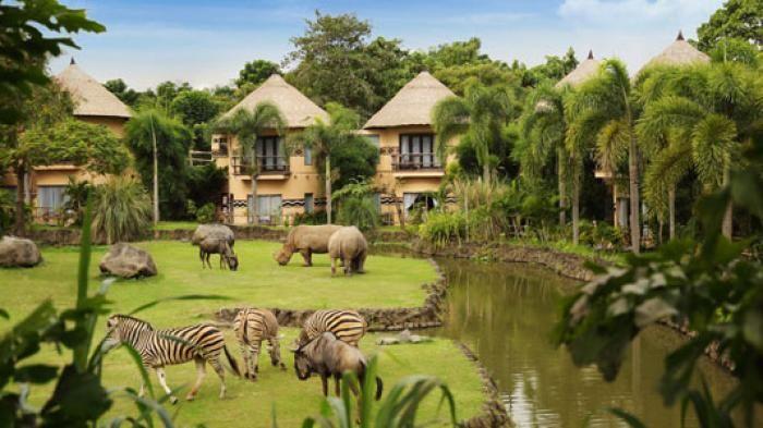 Mara River Safari Lodge - Bermalam Di Sini Kamu Akan Ditemani Zebra dan Badak…