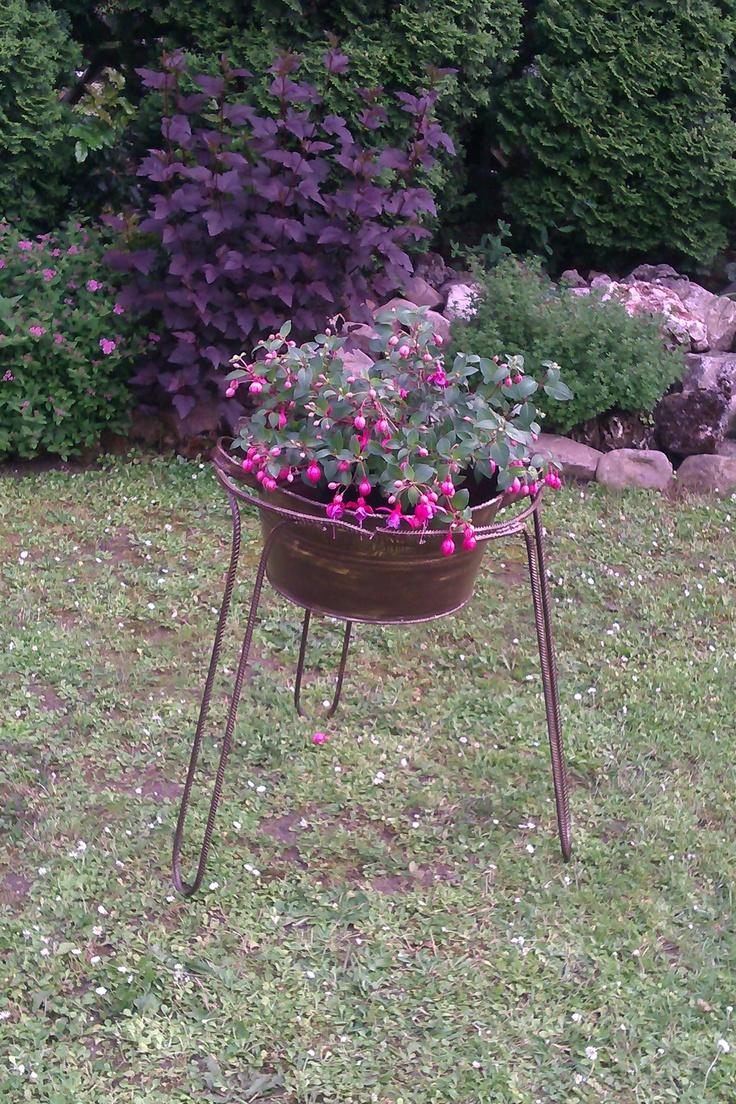 fuchsia in a new flowerpot