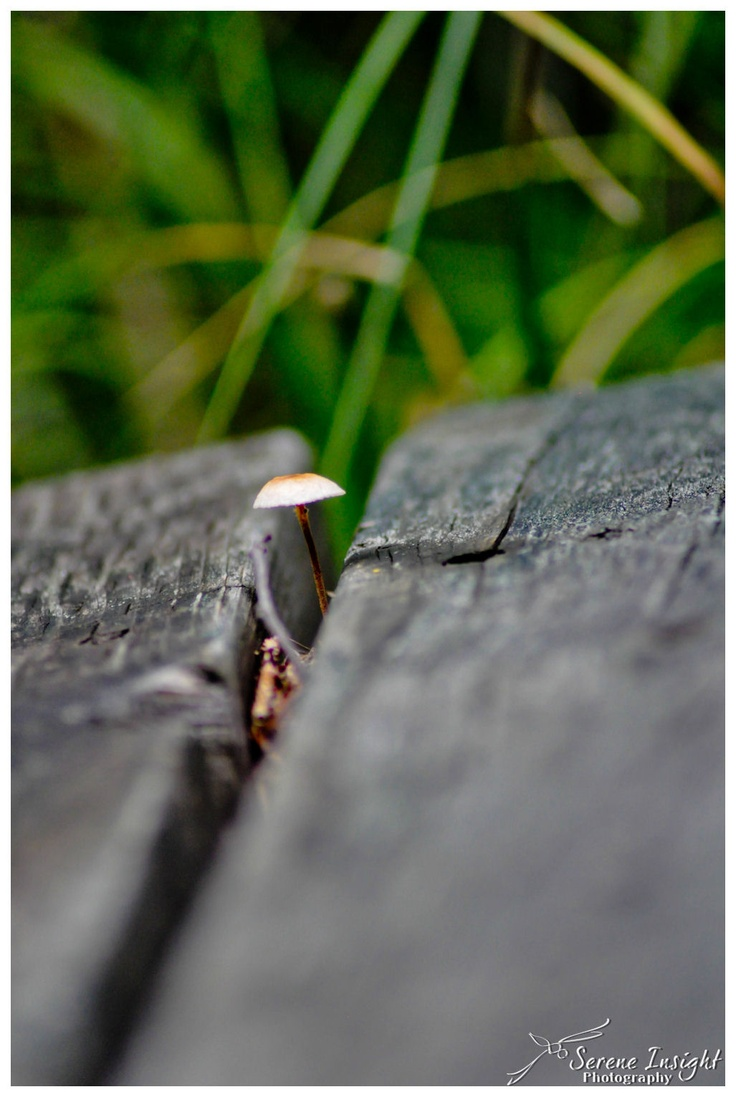 Lone Mushroom!