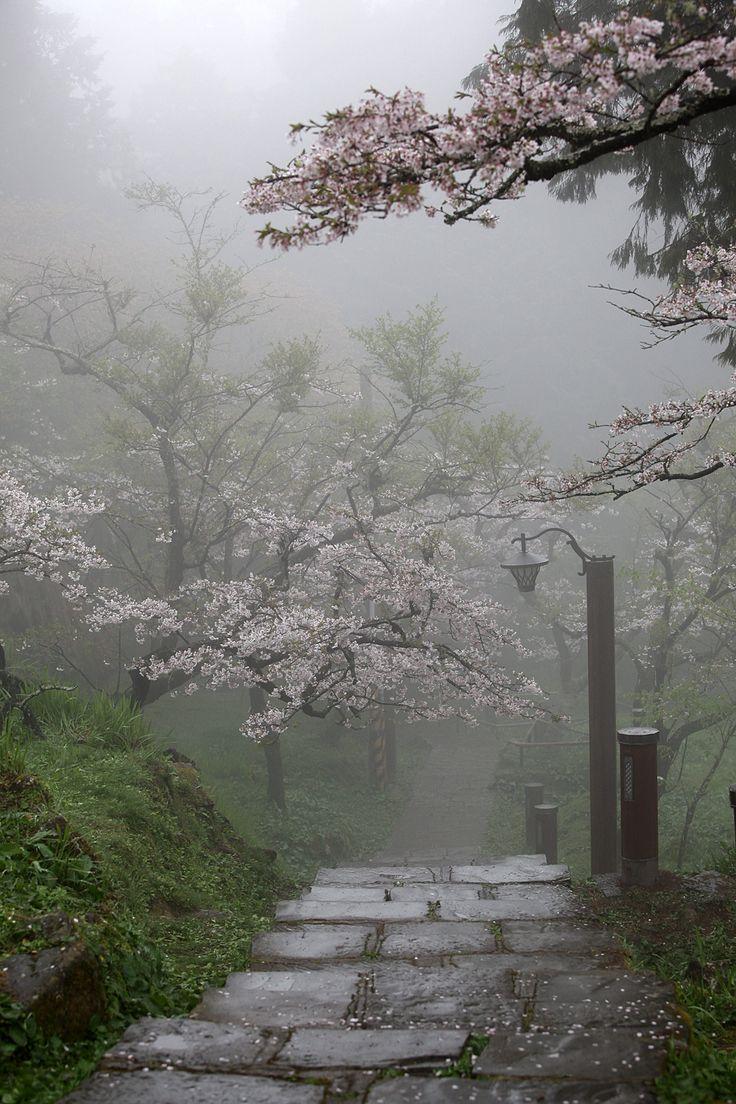 Zen garden..I can feel the mist on my face now..I love the fog..