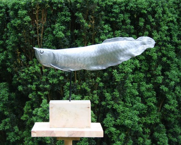 Cold cast,aluminium,bronze,marble Fish sculpture in general sculpture by artist Mitchell House titled: 'Arowana Fish (Living Fossil Fish Swimming life size bronze sculpture)'