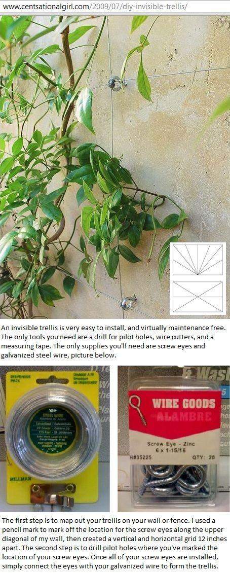 HowTo create invisible trellis with screw eyes and galvanized steel wire