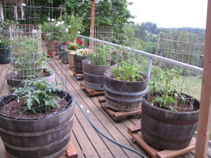 Choices for growing vegetables indoors. 62 best Vegetable Garden inside house images on Pinterest