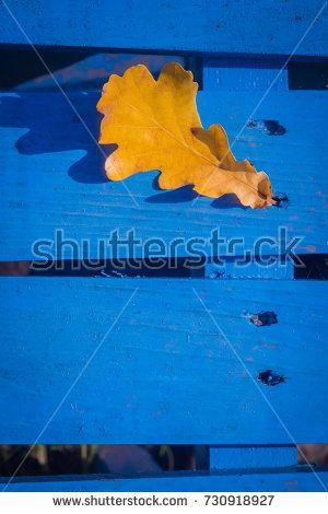 Yellow fallen oak leaves over blue wooden background.
