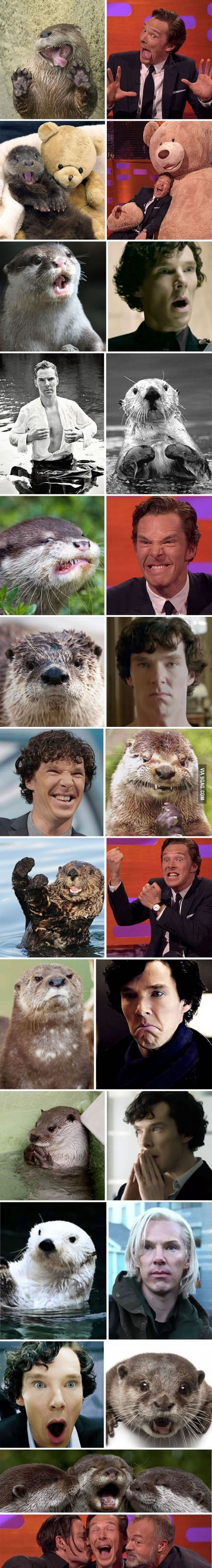 Rumors confirmed: Benedict Cumberbatch is an otter!