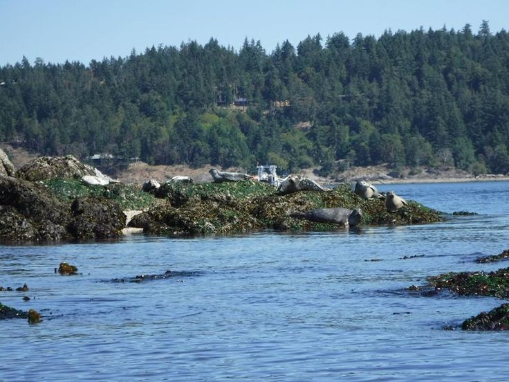 Let us take you into the wild! Dog Mermaid Eco Excursions, Kayak Rentals, Pender Island, BC
