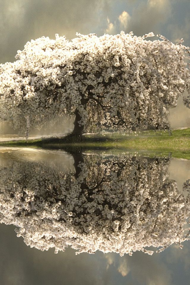 ~Tree Of Life~