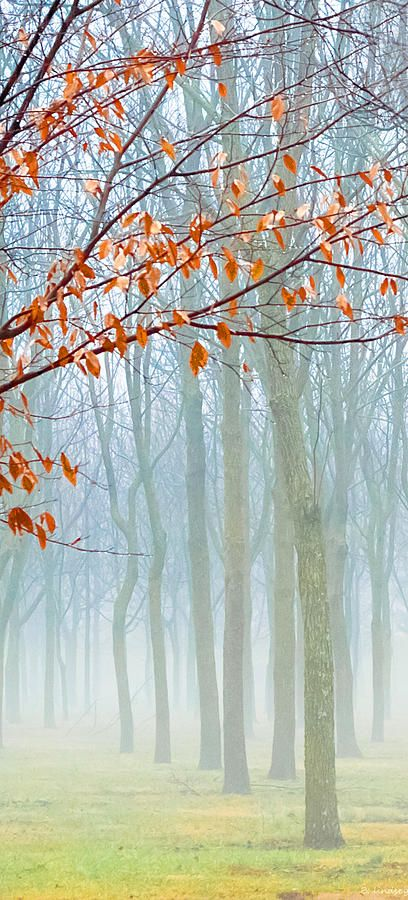 Sometimes the dying of our leaves at the end of a season can make us forget that we're but one part of a much larger forest ...