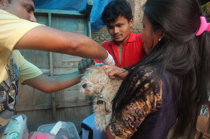 Sanjay and Kamlesh attend a rescue call. #dharamsaladogs #animalwelfare #animalrescue #dogrescue #dharamsala #volunteerindia