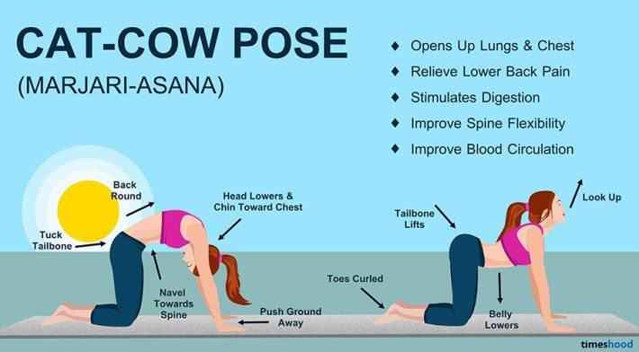 Cat and Cow Pose (Marjariasana) - Yoga for Beginners  - 10 Yoga Position to Get you Start