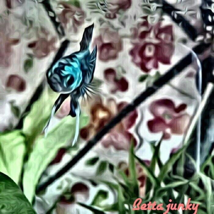 Posidon I love superphoto! http://bettajunky.blogspot