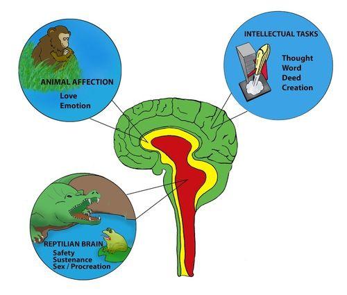 Neocortex: Triune Brain (Paul MacLean)