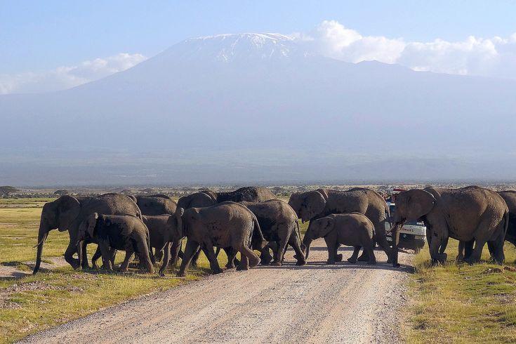 https://flic.kr/p/bySrUP   Kenyan roads 6   Elefants on road in Amboseli National Park (Kenya) at the foot of Kilimanjaro. January, 2012.