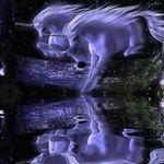 Vodní animace - Galerie 2 - Animované Vodní Fotografie - Anděl Card Měřené